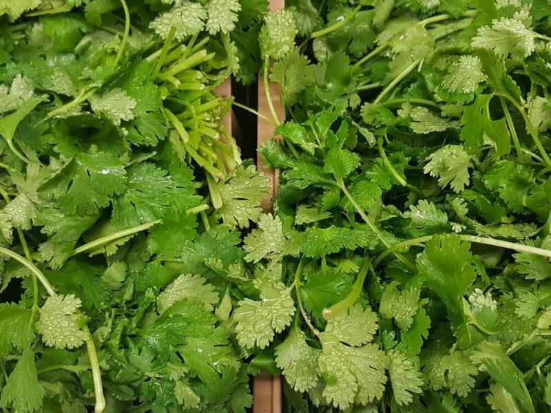 Вирощування кінзи: як садити, вирощувати та збирати кінзу
