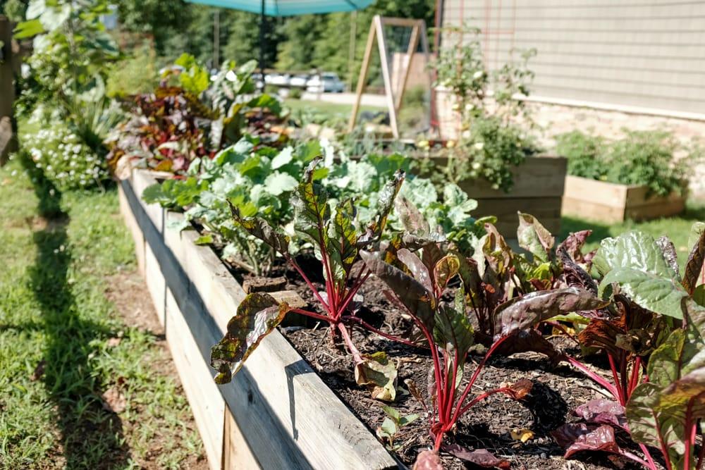 Все, що потрібно знати про створення саду