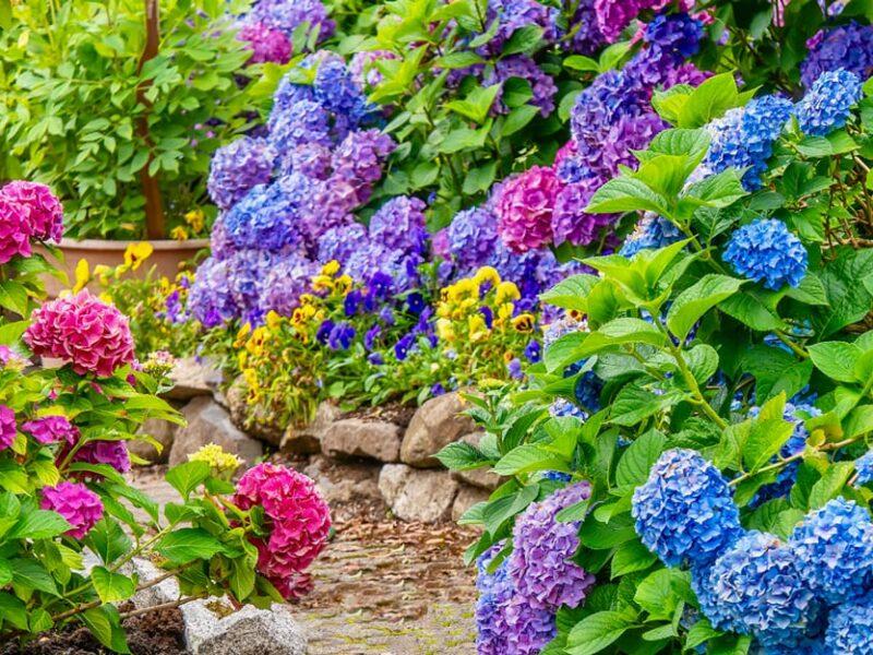 Найкращі літні квіти для прекрасного саду