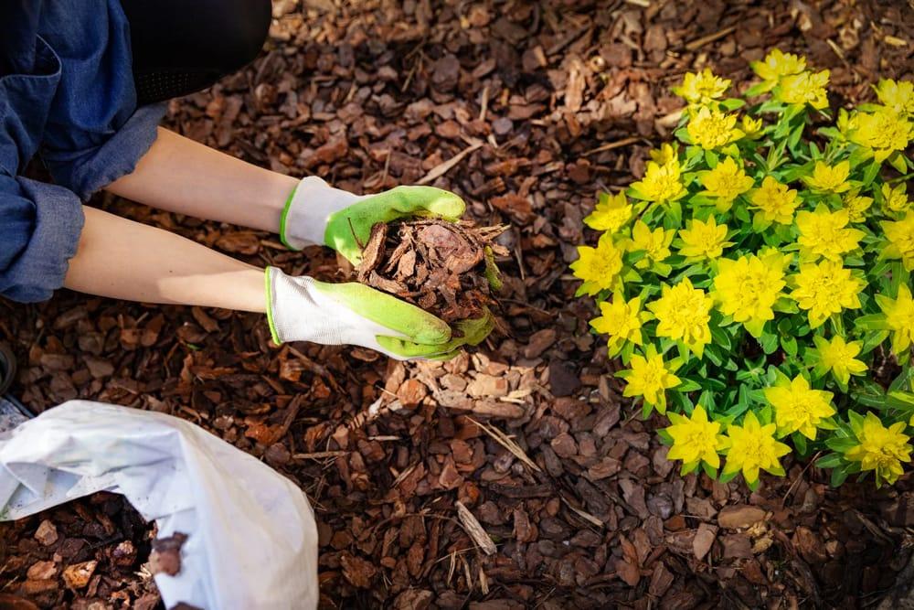 Мульчування: як знайти найкращий тип для свого саду